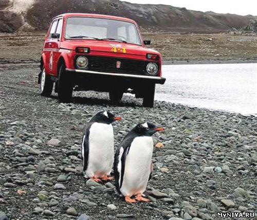 Нива в Антарктиде